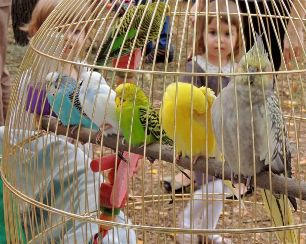 Cage with colorful parrots