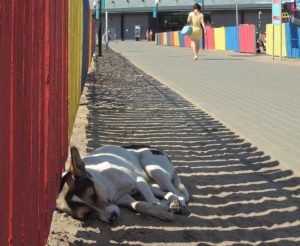 Dog's midday sleep on the sidewalk in the shadow of the fence on a sunny day